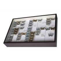 Cassette entomologiche